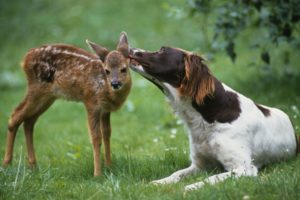 Animal love: Unlikely friendships such as this one, between a deer and dog